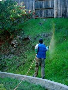Foothill Sierra weed control