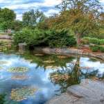 Control weeds around your pond in the Sierra Foothills