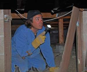 Termite Control and Termite Inspections
