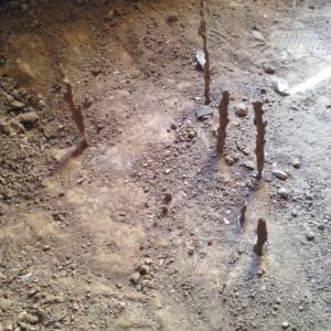 Subterranean termite tubes