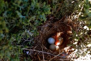 1st_hatchling_April_28_2015
