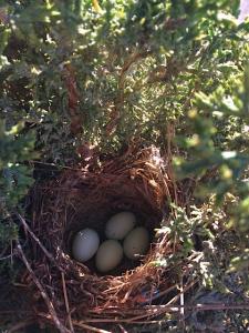 4th_egg_April_15_2015