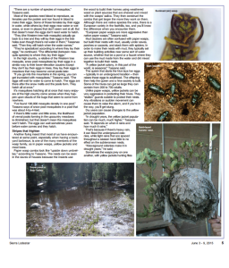 Page two of Sarah Lunsford's article, The Bugs Around Us, in Sierra Lodestar, June 3-9, 2015