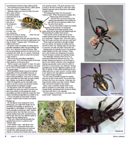 Page three of Sarah Lunsford's article, The Bugs Around Us, in Sierra Lodestar, June 3-9, 2015