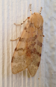 Moth. Image by Paul Cooper, 12 October 2015