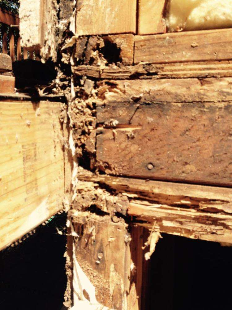 Drywood termite damage. valley Springs Ca. Photo by Josh Esposito. 12 September 2016.