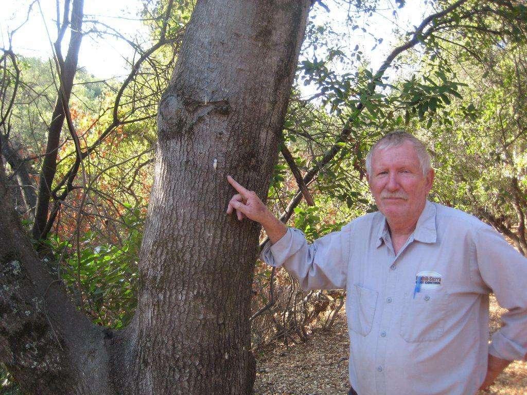Paul Cooper and foamy bark canker