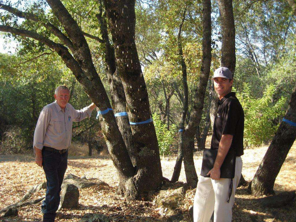 Paul Cooper and Allan Ramorini with an infected tree at Greenhorn Creek