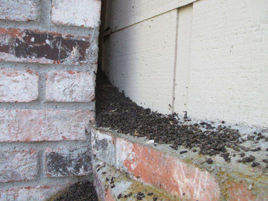 Guano all over the lower part of the chimney.