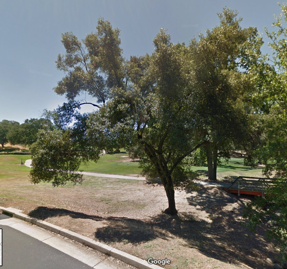 The live oak in July 2012. Google Street View.
