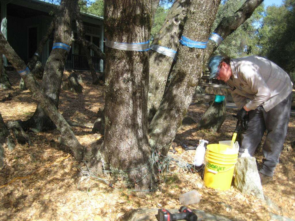 Ryder Richards preparing to inject the live oaks with Arborjet's Emamectin and Propizol.
