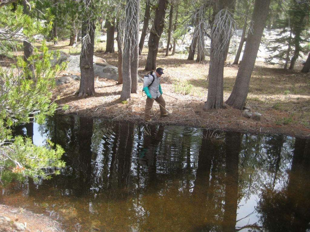 Josh Esposito sampling for snow pool mosquito larvae at one of the numerous vernal pools in the Bear Valley area.
