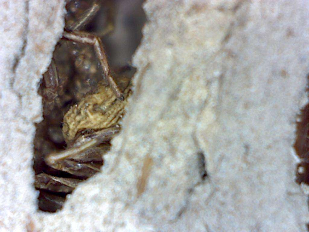Spiders still inside a chamber that did not have an exit hole.