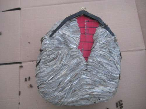Backside view of the birdhouse, showing the backside of the yellow jacket nest.