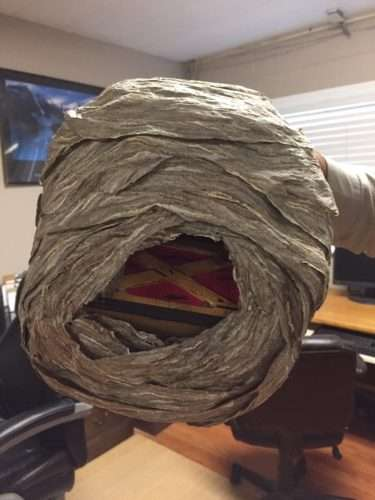 You can see the bird house inside the enveloping paper nest. Photo by Heather Nordstrom.